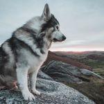 Odin Game of Thrones direwolf summer Bran Stark dog puppy dead died